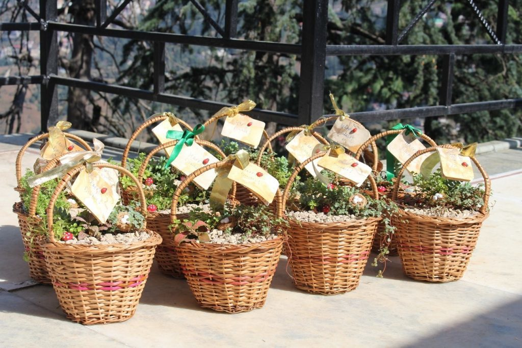 Miniature Gardening workshop happening in Shimla